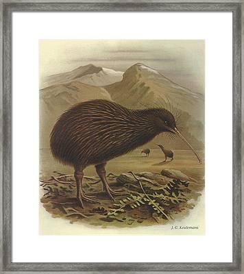 Brown Kiwi Framed Print by J G Keulemans