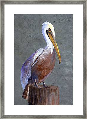 Brown Pelican Framed Print by Elaine Hodges