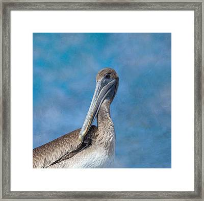 Brown Pelican Framed Print by Kim Hojnacki