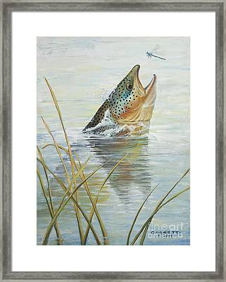 Brown Takes Damsel  Framed Print by Rob Corsetti