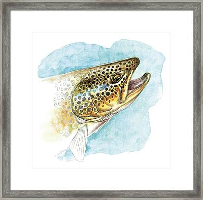 Brown Trout Study Framed Print by JQ Licensing