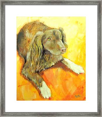 Brownie Framed Print by Marcello Cicchini