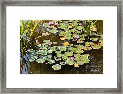 Bruges Lily Pond Framed Print by Carol Groenen