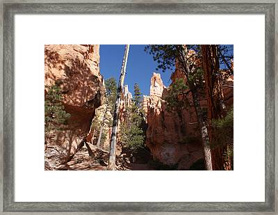 Bryce Canyon Trail Framed Print by Michael J Bauer