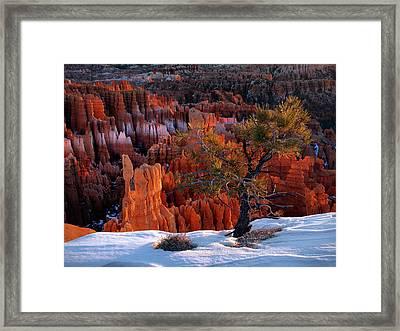 Bryce Canyon Winter Light Framed Print by Leland D Howard