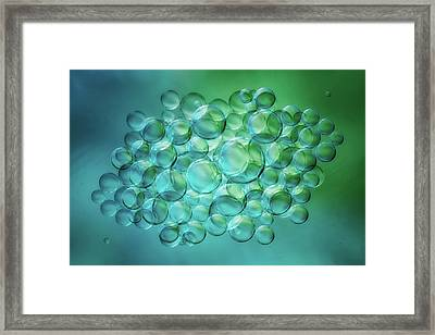 Bubbles Universe Framed Print by Cora Niele