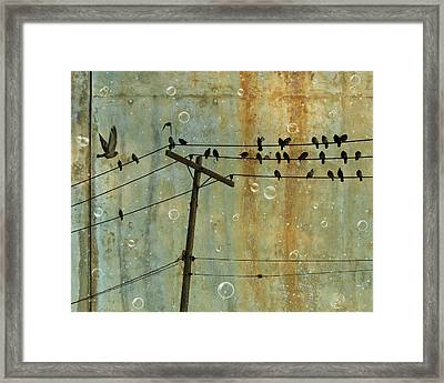 Bubbly Birds Framed Print by Gothicolors Donna Snyder