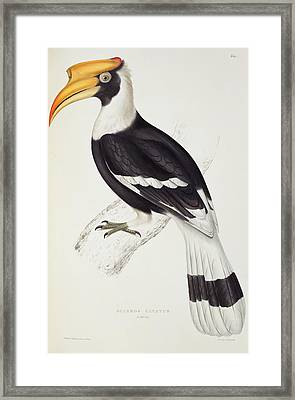 Great Hornbill Framed Print by John Gould