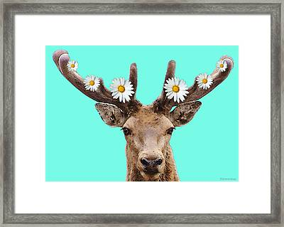 Buck Deer Art - Dont Shoot Framed Print by Sharon Cummings
