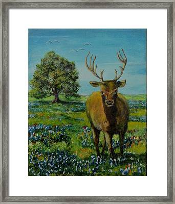Buck In Bluebonnets Framed Print by James Taylor
