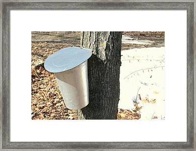 Buckets For Collecting Maple Sap Framed Print by Nadine Mot Mitchell