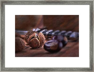 Buckeye Nut Still Life Framed Print by Tom Mc Nemar