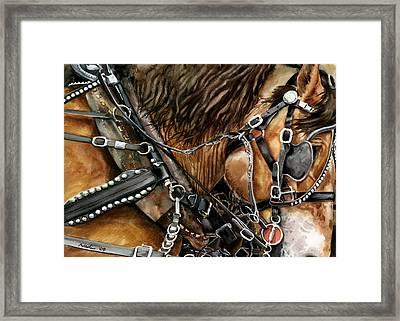 Buckskin Framed Print by Nadi Spencer
