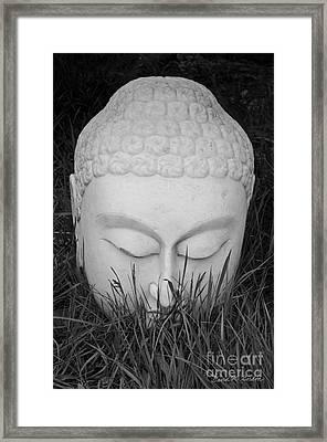 Buddha I Framed Print by Dave Gordon