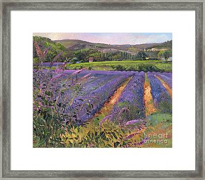 Buddleia And Lavender Field Montclus Framed Print by Timothy Easton