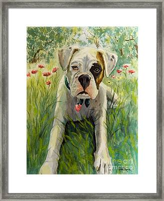 Buddy The Boxer Framed Print by William Reed