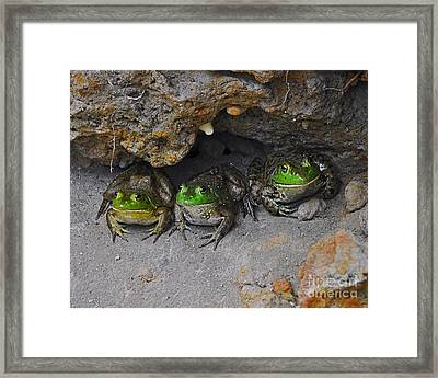 Bud Bullfrogs Framed Print by Al Powell Photography USA