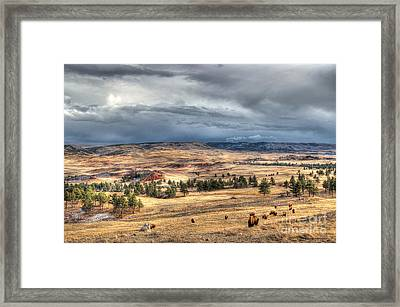 Framed Print featuring the photograph Buffalo Before The Storm by Bill Gabbert