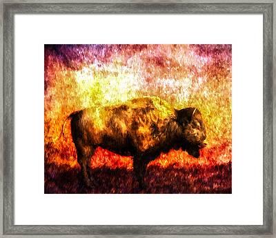 Buffalo Framed Print by Bob Orsillo