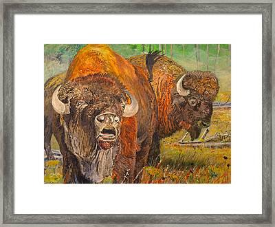 Buffalo Calling Framed Print by Alvin Hepler
