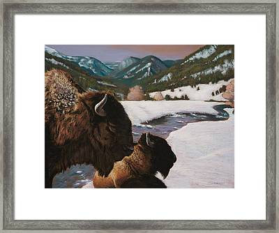 Buffalo Framed Print by Christopher Reid
