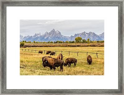 Buffalo Under The Tetons Framed Print by TL  Mair