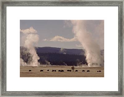 Buffalos Roaming In Yellowstone National Park. Framed Print by Retro Images Archive