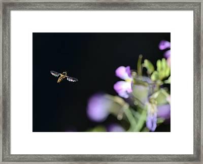 Bug Out Framed Print by Fraida Gutovich