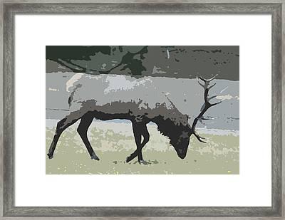 Bull Elk Cutout Framed Print by Brad Strickland MEd