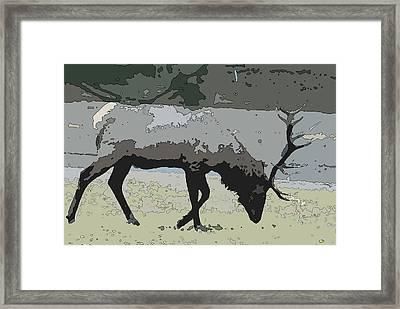 Bull Elk Poster Edges Framed Print by Brad Strickland MEd