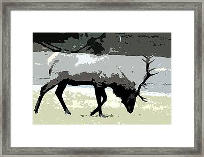 Bull Elk Watercolor Framed Print by Brad Strickland MEd