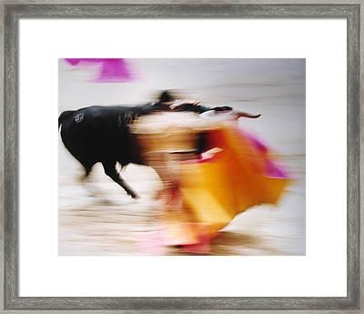 Bullfight  4 Framed Print by Daniel Gomez