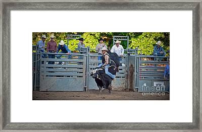 Bull Fool Framed Print by Gary Keesler