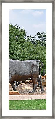 Bull Market Quadriptych 4 Of 4 Framed Print by Christine Till