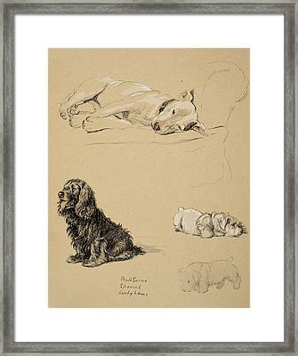 Bull-terrier, Spaniel And Sealyhams Framed Print by Cecil Charles Windsor Aldin