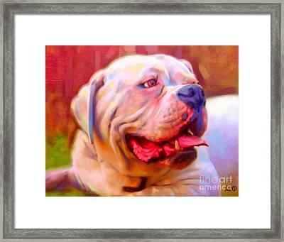 Bulldog Portrait Framed Print by Iain McDonald