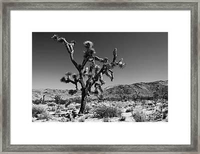 Bullet The Blue Sky - Joshua Tree N.p Framed Print by Henk Meijer Photography