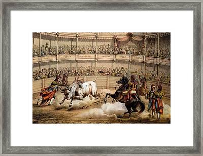 Bullfight Framed Print by Federico Mialhe