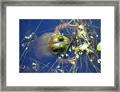 Bullfrog Heaven Framed Print by Dan Sproul