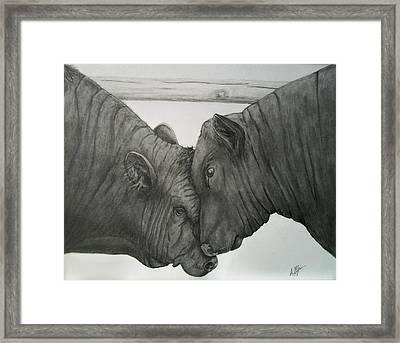 Bullheaded Framed Print by Adrienne Giljam