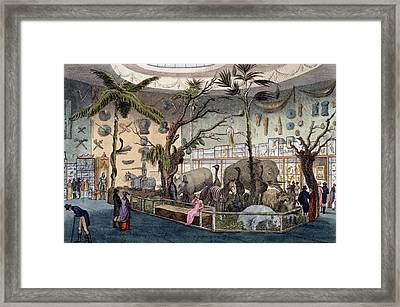 Bullocks Museum, 22 Piccadilly, London Framed Print by English School