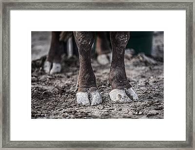 Bull's Feet Framed Print by Amber Kresge
