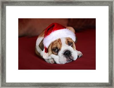 Bully For Santa Framed Print by Julie L Hoddinott