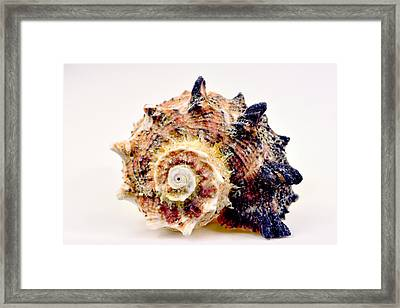 Bumpy Sea Shell Framed Print by Toppart Sweden