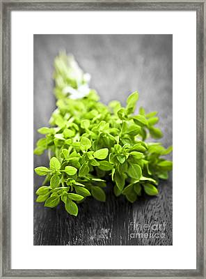 Bunch Of Fresh Oregano Framed Print by Elena Elisseeva