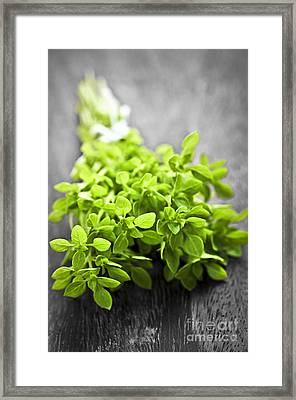 Bunch Of Fresh Oregano Framed Print by Elena Elisseeva