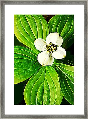 Bunchberry Blossom Framed Print by Bill Caldwell -        ABeautifulSky Photography