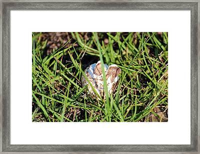Bunny Ears Mushroom Framed Print by Cynthia Guinn