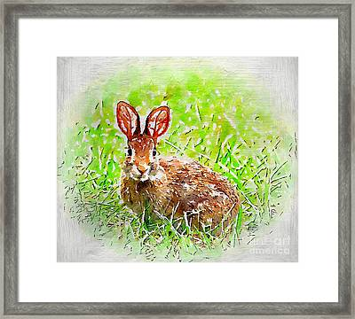 Bunny - Watercolor Art Framed Print by Kerri Farley