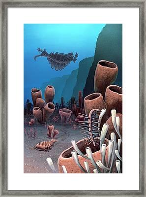 Burgess Shale Framed Print by Richard Bizley